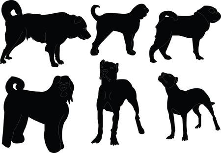 강아지 컬렉션