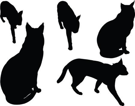 야생 고양이 컬렉션 일러스트