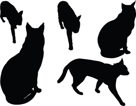 wild cat collection  Vector