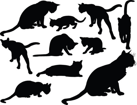 cat collection  Vector