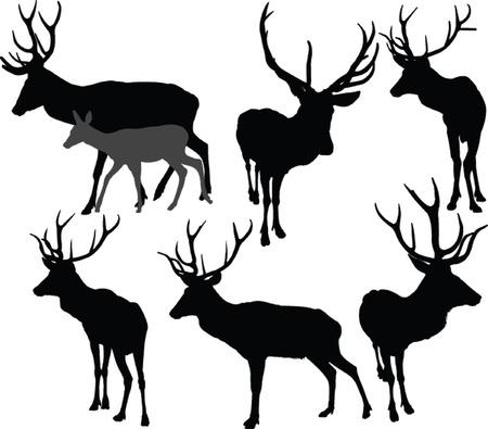 deer collection 2