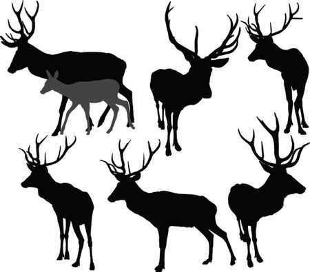 deer collection 2