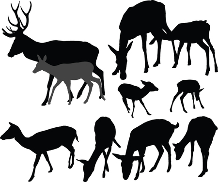 doe and fawn - vector