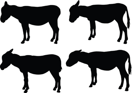donkey collection  Vector