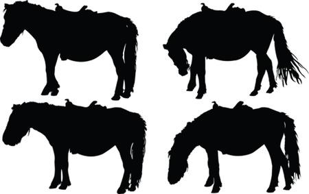 shetlander: paarden collectie
