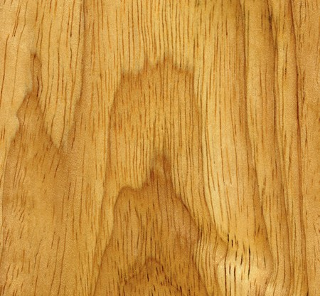The wooden surface of the beech, close-up