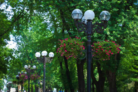 Street lamps placed on park alley, Donetsk municipal park zone