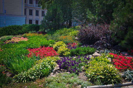 Flower bed in the city center, decorative floral composition, Donetsk municipal park zone Stock Photo