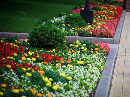 Flower beds with colorful flowers and little shrubs, city garden, Donetsk municipal park zone