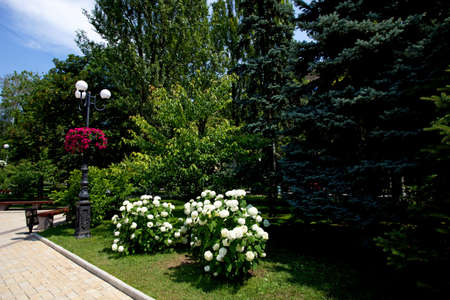 recreation area, park alley wiht bench, trees and flowers bush, iron lamp post with flower pot