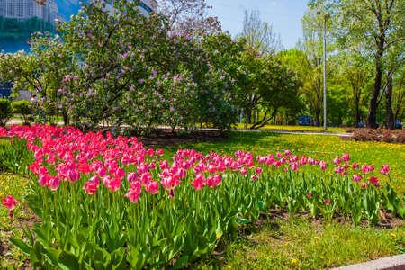 Rote Tulpen auf dem Rasen mit blühenden Bäumen im Stadtpark, Elemente der städtischen Infrastruktur, Gebietserschließung