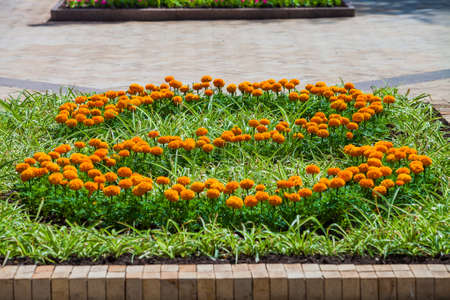 Marigold flower bed in urban public place, Park infrastructure