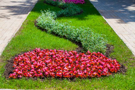 Flower bed in urban public place, Park infrastructure