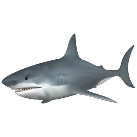 saltwater fish: Big White Shark saltwater fish. Full compatible. Created with gradient mesh