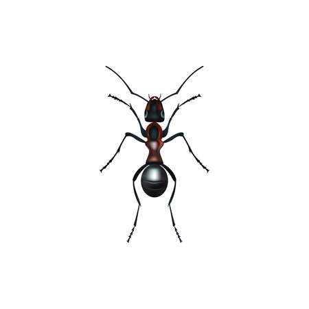 Insect realistic ant isolated on white background vector illustration Illustration