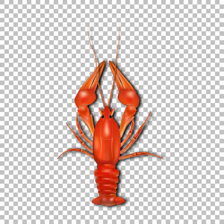 Red crayfish 3d vector icon.