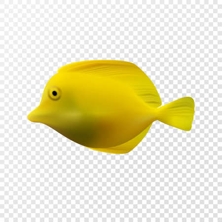 Realistic exotic yellow fish. Vector illustration eps10, isolated on transparent background.