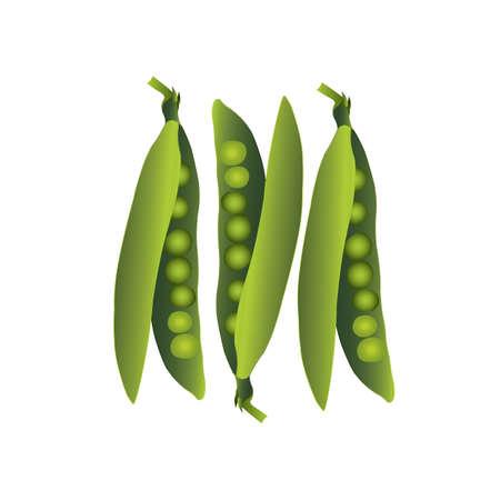 green peas: Illustration of green peas Illustration