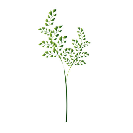 Illustration of a plant