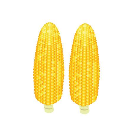 ядра: Иллюстрация кукурузы