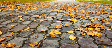 Sidewalk in a park in autumn