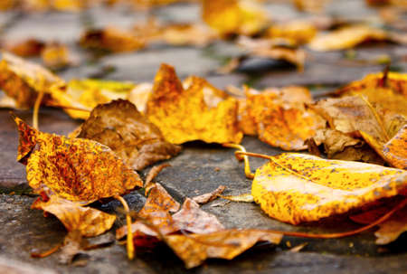 Sidewalk in a park in autumn Stock Photo - 15443802
