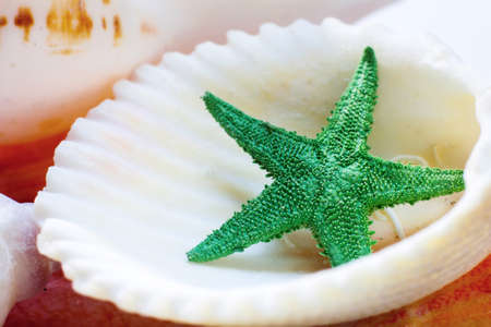 Sea shell and star Stock Photo