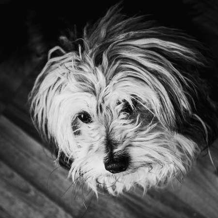 Dog waiting at home