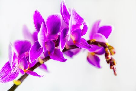 Macro image of orchid flower, captured with a small depth of field. floristic colorful abstract background