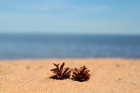 Pine cones on the sandy shore. Summer in Scandinavia. Natural landscape Zdjęcie Seryjne