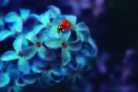Ladybug on a lilac flower. Natural background