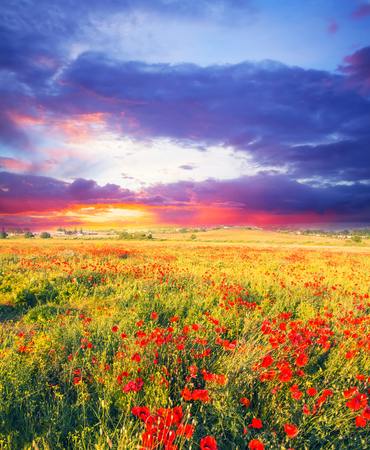 Summer field with flowers. Soft focus vintage colored natural background Zdjęcie Seryjne - 81310464