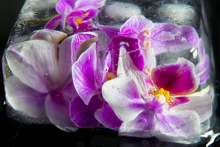 Macro image of orchid flower in ice, taken with a small depth of field. Floristic colorful abstract background Zdjęcie Seryjne - 93403387