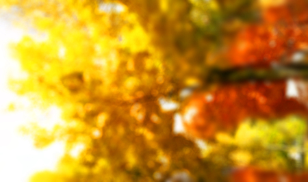Abstract nature autumn background: colorful leaves in autumn