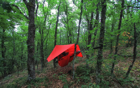 Trees and red hammock with tent in summer forest. Travel and adventure concept Zdjęcie Seryjne - 109237014