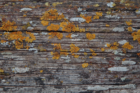 Old wood. Wooden texture. Abstract natural background