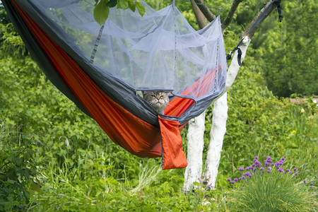 Cat in hammock outdoor camping 版權商用圖片