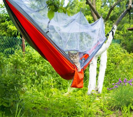 Cat in hammock outdoor camping Zdjęcie Seryjne