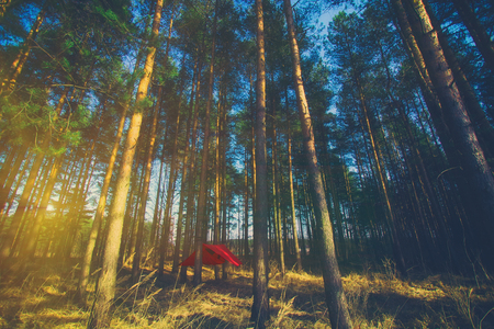 Pine trees and red hammock with tent in spring wood. Vintage style Travel and adventure concept Zdjęcie Seryjne