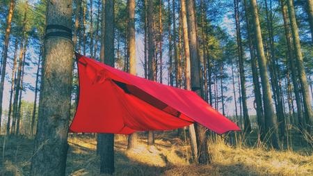 Kiefern und Hängematte mit Zelt im Frühlingsholz. Reise- und Abenteuerkonzept