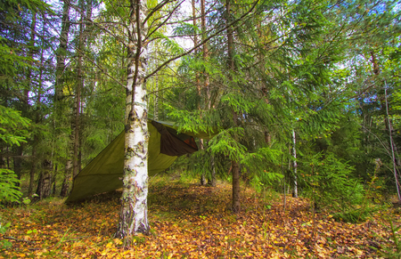 Trees and tarp in spring wood. Travel and adventure concept