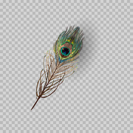 Peacock feather on transparent background. Vector Illustration