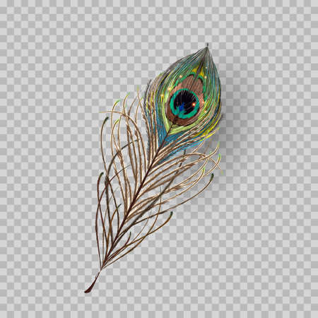 Peacock feather on transparent background. Vector Illustration Foto de archivo - 111753267