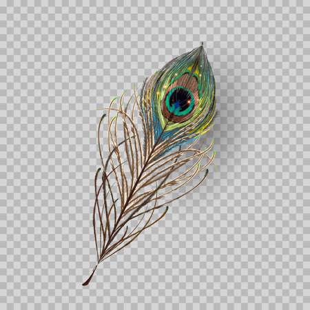 Piuma di pavone su sfondo trasparente. illustrazione vettoriale Vettoriali