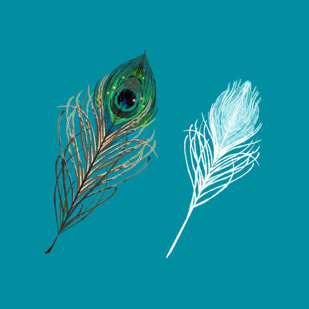 Piuma di pavone su sfondo blu. illustrazione vettoriale