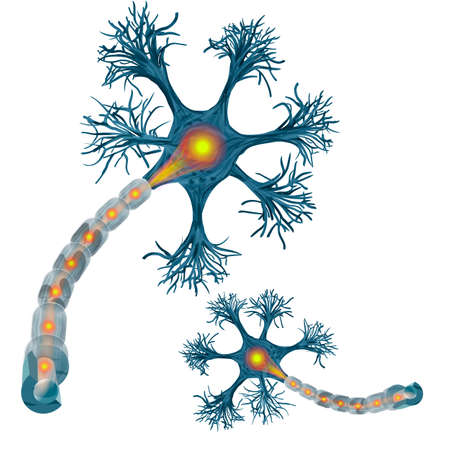 Neuron that is the main part of the nervous system. vecto illustration