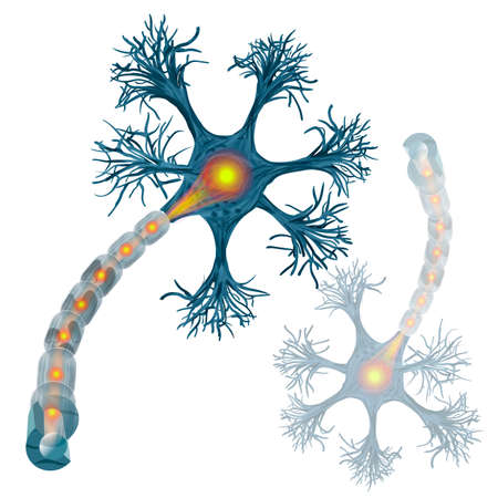 Neuron that is the main part of the nervous system. vector illustration