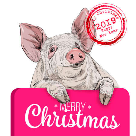 Colorful cartoon pig holding horizontal poster. 2019 year chinese symbol. Farm animal vector illustration for icon, sign, patch, certificate, gift card, stamp logo