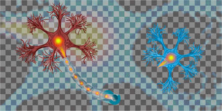 3d human neuron isolated on transparent background. Realistic vector illustration. Template for medicine and biology presentations, flyers, posters.