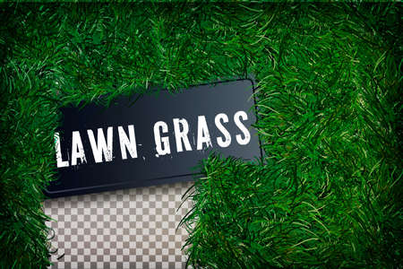 Grass square 3D. Beautiful green grassy field, isolated on white transparent background. Lawn abstract nature texture.